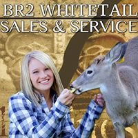 BR2 Whitetails