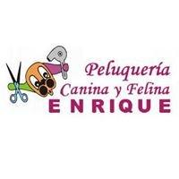 Peluquería Canina y Felina Enrique