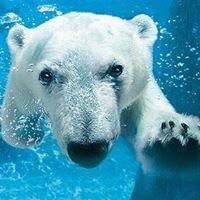 Parker Polar Bear Club