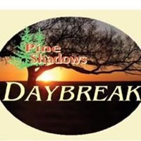 Pine Shadows Daybreak