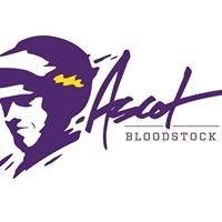 Ascot Bloodstock