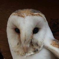 Opvangcentrum voor Vogels en Wilde Dieren - Brasschaat