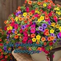 Gėlių auginimas,gėlės apželdinimui