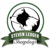Steven Ledger Sheepdogs