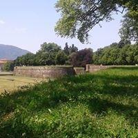 Lucca: le mura