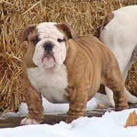 Holtzkys Bulldogs