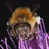 Bob's Beekeeping Supplies