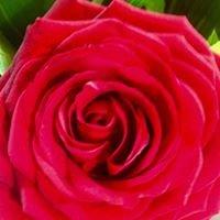 Anne Flore fleuriste à Perros Guirec