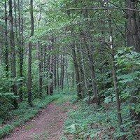 Joseph E. Ibberson Conservation Area