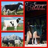 Sprenger Holsteins