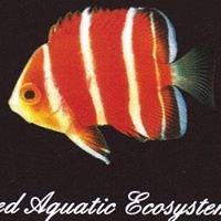 Advanced Aquatic Ecosystems, LLC