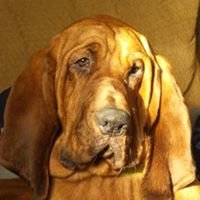 River Bottom Bloodhounds