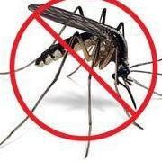 Shoo!Bug Tag Philippines