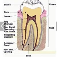 Fort Bend Endodontic Specialists