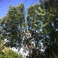 Steadfast Tree Service