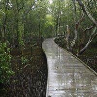 Kooragang Wetlands