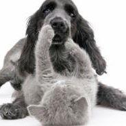 Australian Veterinary Behaviour Services