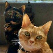 Bast Cat Club