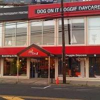 Dog On It Doggie Daycare