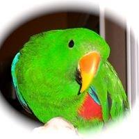 Beaker's Parrot Place