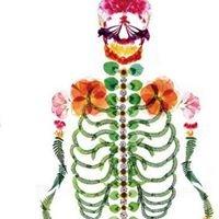 Northampton Osteopaths