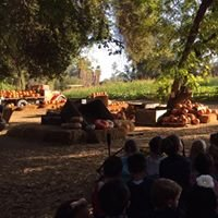 Hillcrest Christmas Tree & Pumpkin Farm