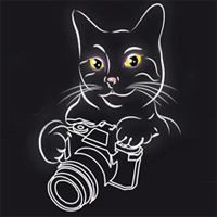 Black Cat Foto Art