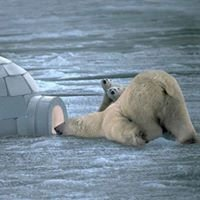 Polar Bear Live Limited