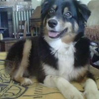Pawsitive Guidance Dog Training & Pet Sitting