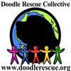 Doodle Rescue Collective, Inc. Labradoodle & Goldendoodle Rescue