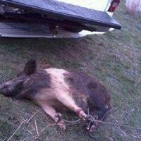 Oklahoma hog hunting