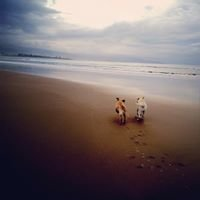 Doggie Heaven - Dog friendly holidays in Victoria & South Australia