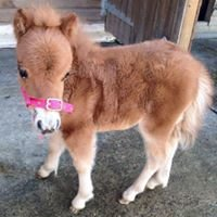 Ponies For Parties and pet help