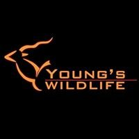 Young's Wildlife