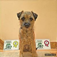 DogWise Ireland