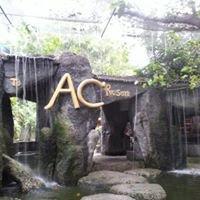 Ac Bar Sairee Beach Koh Tao Thailand