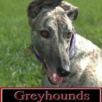 Greyhounds Puttin' On The Glitz!!!
