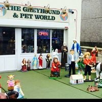 The greyhound and pet world