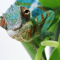 Association Malgache pour la Biodiversité et le Tourisme Durable