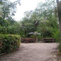 Sydney Rainforest Nursery