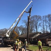 Affordable Tree Services LLC