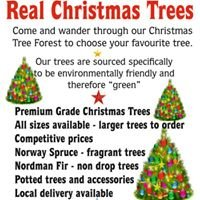 Real Christmas Trees Shepperton