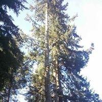 Timberview Tree Service, LLC.