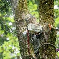 Precision Tree Service