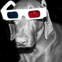 Greydog Creative