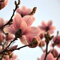 Magnolia Event- und Hochzeitsfloristik und vieles mehr