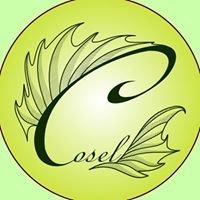Winnica Cosel