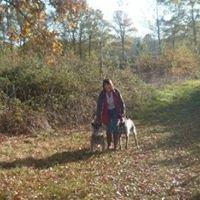 Limousin Dog Training