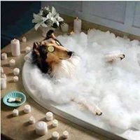 Happy Paws and Spa