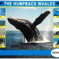 Humpback WHALE Excurcions